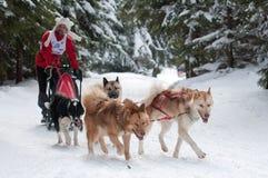 12. Europäisches sleddog laufende Meisterschaft Slowakei Lizenzfreies Stockbild