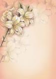 12 ilustracja tła Obrazy Royalty Free