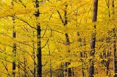 12 jesień liść nie Zdjęcia Royalty Free
