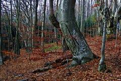 12 jesień las Zdjęcie Royalty Free