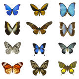 12 olika fjärilar Fotografering för Bildbyråer