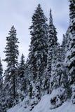 12 räknade snowtrees Royaltyfria Bilder