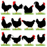 12 Roosters and Hans Silhouettes Set Royalty Free Stock Images