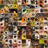 121 animales y ojos humanos Imágenes de archivo libres de regalías