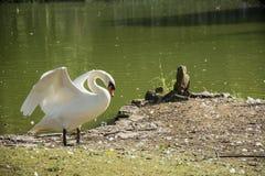 鸟122 免版税库存照片