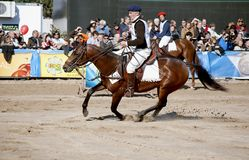 124阿根廷农村博览会的家畜 图库摄影