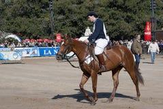 124阿根廷农村博览会的家畜 库存照片