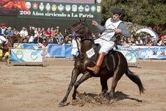 124阿根廷农村博览会的家畜 免版税图库摄影