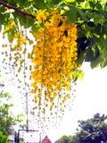 126 kwiat Obraz Stock