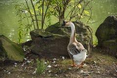 鸟129 库存图片
