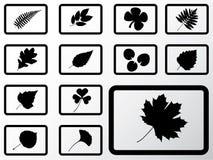12b被设置的图标叶子 免版税图库摄影