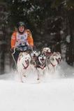 12de Europees sleddog het rennen Kampioenschap Slowakije Stock Foto's