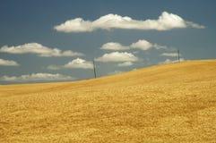 13个域麦子 免版税库存图片