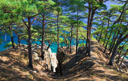 13个海岸线结构树 图库摄影