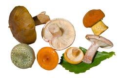 13个蘑菇 库存照片