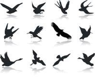 13个鸟图标设置了 库存例证