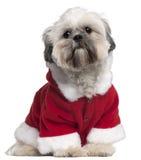 13个apso拉萨月成套装备圣诞老人 免版税库存照片