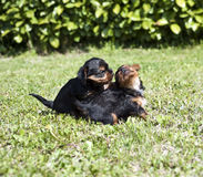 13只小狗 免版税库存照片
