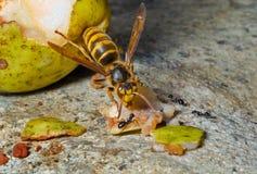 13大黄蜂 图库摄影
