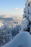 13森林没有多雪 免版税库存图片