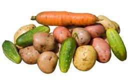 13棵蔬菜 库存图片