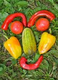 13棵表面蔬菜 库存照片