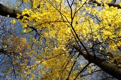 13片秋天叶子没有 免版税库存照片