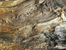 13纹理木头 免版税库存照片