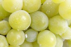 13 виноградины Стоковое Фото