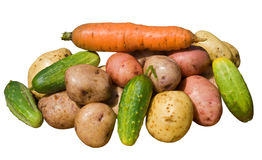 13 овоща Стоковые Изображения