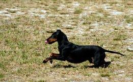 13 hundar Arkivbild