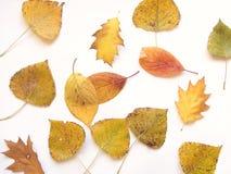 13 liści jesienią Obrazy Royalty Free