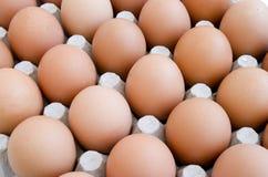 13 nya ägg Arkivfoto
