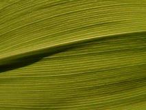 13 texturer royaltyfria foton