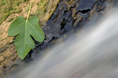 13 wodospadu Zdjęcia Stock