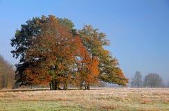 134 höstoakstamford trees Royaltyfri Bild