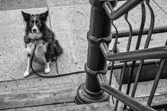 139 dog of revolver-vancouver-gastown-xe2-zeiss35-2-20150810-DSCF6720-Edit.jpg Royalty Free Stock Image