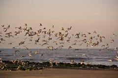14只海鸥 库存照片