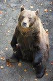 14头熊 库存照片