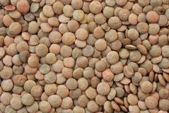 14扁豆 免版税库存图片
