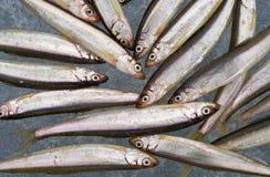 14条鱼冰 库存照片