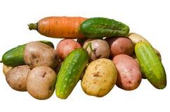 14棵蔬菜 库存照片