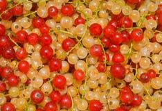 14浆果无核小葡萄干 库存图片