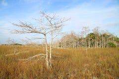 14片沼泽地横向 库存图片