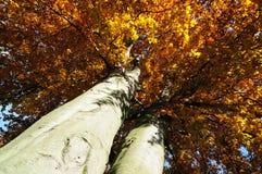 14片秋天叶子没有 免版税库存照片