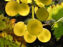 14葡萄 库存照片