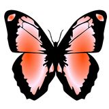 14蝴蝶 库存图片