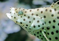 14 рыбы тропической Стоковое Фото