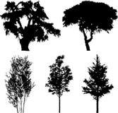14 arbres réglés d'isolement Images stock