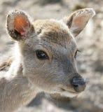 14 deers Royaltyfri Fotografi